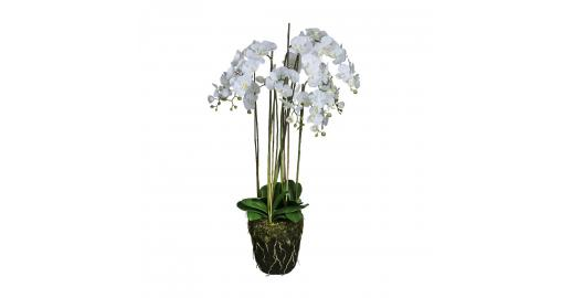 Sia Green Shop Artificial White Phalaenopsis Orchid