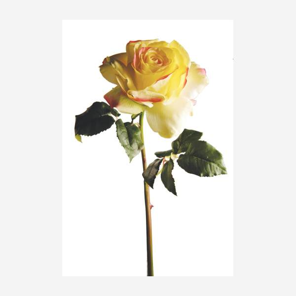 Rose artificielle - 57 cm - jaune