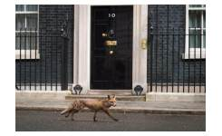 DOWNING STREET photo print 40X50