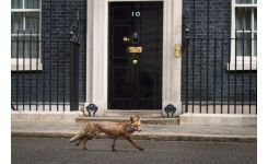 Tirage photo DOWNING STREET 40X50