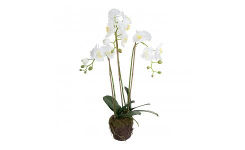 Artificial white Phalaenopsis Orchid plant 75cm M